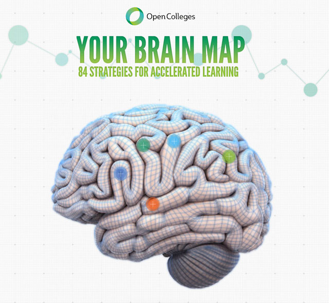 How Your Brain Really Works (Interactive Graphic)