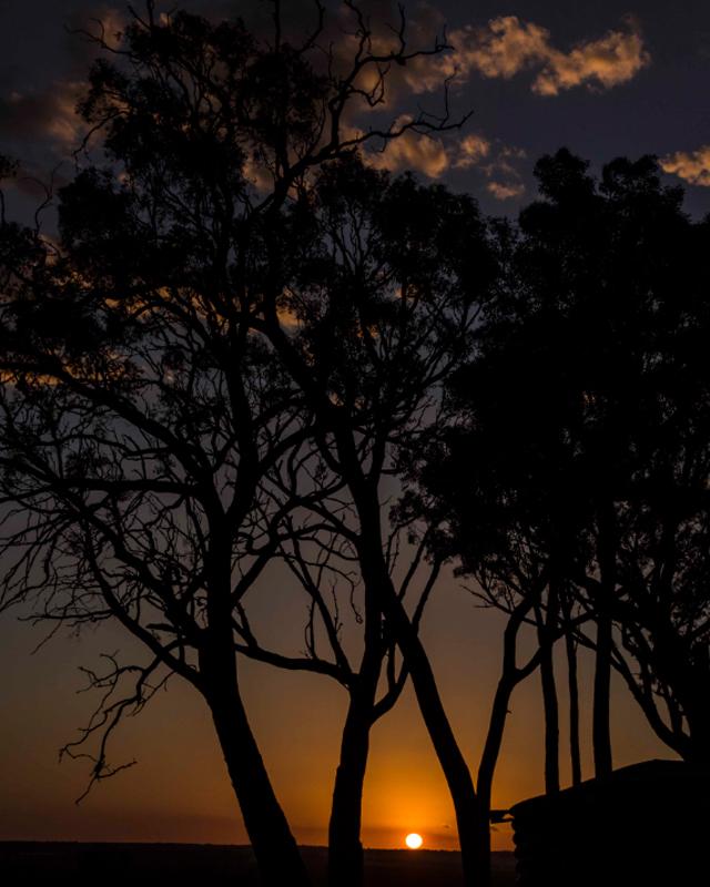 internal-tree-sunset