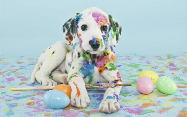 mess-art-dog-int