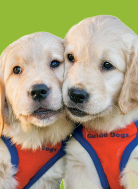 Guide Dogs QLD